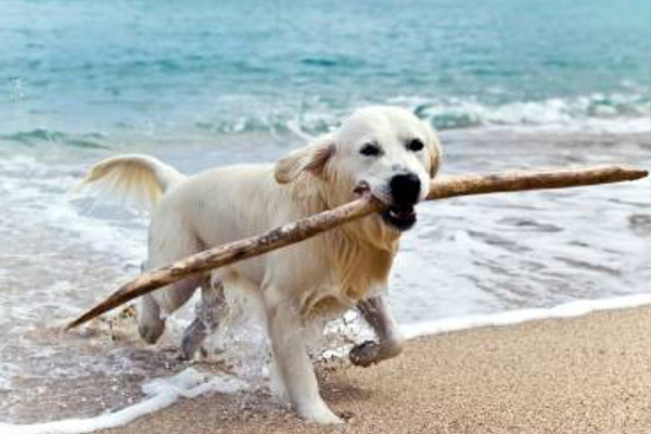 Dog Friendly Holidays in North Devon - Self Catering